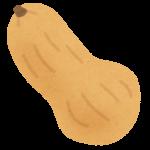 バターナッツカボチャってどんな野菜?適した調理法や食べ方、特徴とは?
