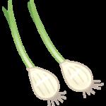 ニンニクから芽が出てきた時の対処法!食べられるの?最適な保存方法とは?