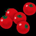ミニトマトをうまく保存するには?おいしさキープの秘訣が水ってホント?
